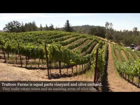 Olive Oil Tasting and Tour at Trattore Farms with Esther Tseng