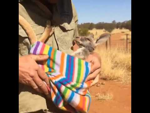 tiengiangtouist.net - Guide to Alice Springs, Northern Territory Australia 2017
