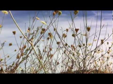 Клип Emily Wells - Passenger