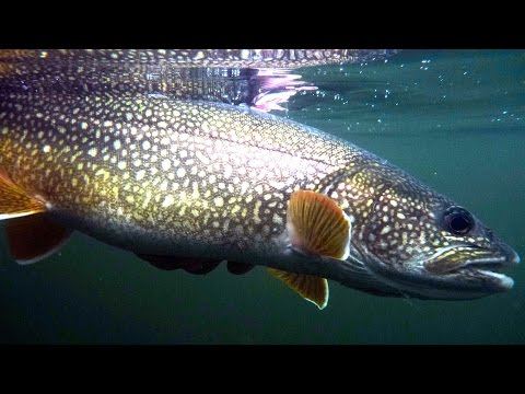 Fly Fishing Heaven - Hearne Lake Lodge NWT