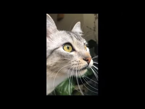 Chirping Cat Appears To Be Speaking With Aliens