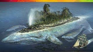 #68 Sự Thật Nổ Não SS02E03: Cá Voi Cạn! 😱😱😱 thumbnail