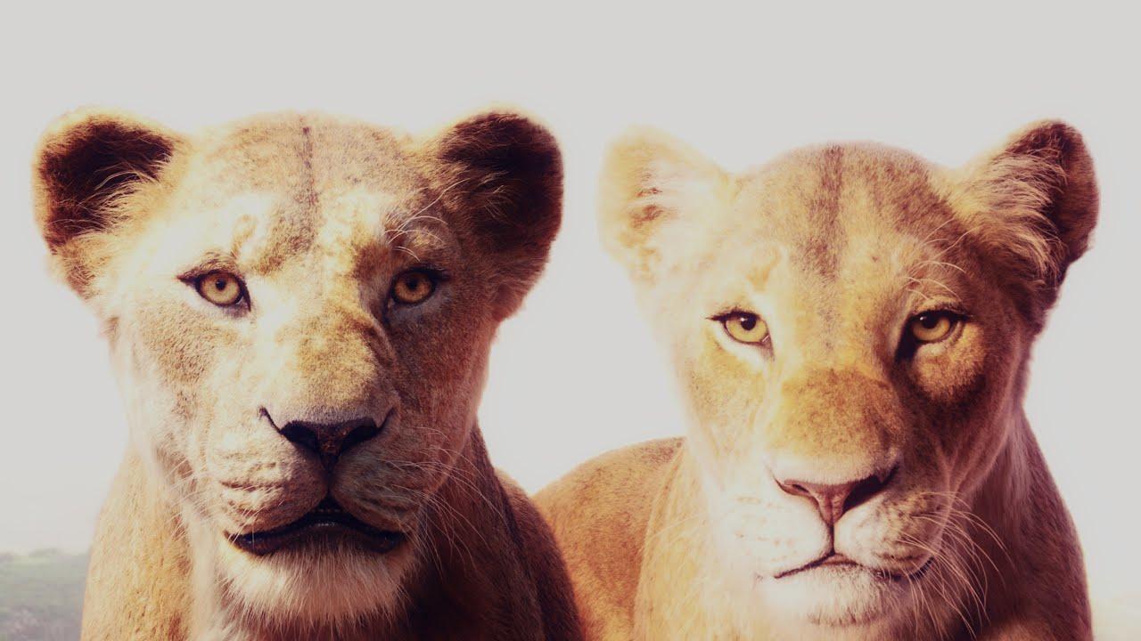 Disneys The Lion King 2019 Trailer Ii Animated Style