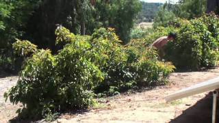Summer In Ojai | 2010
