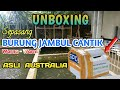 Unboxing Sepasang Burung Falk Cockatiel Parkit Australia Atau Kaka Tua Mini Burung Jambul Cantik  Mp3 - Mp4 Download