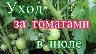 Помидоры в теплице в июле. Основные работы.(10.07.16 г.)(Июль в самом разгаре. Какие же работы необходимо проводить с томатами в теплице в это время, когда томаты..., 2016-07-11T08:52:31.000Z)