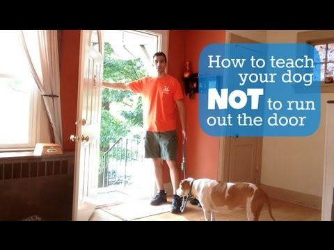 Teach Your Dog Not To Run Out The Door Youtube