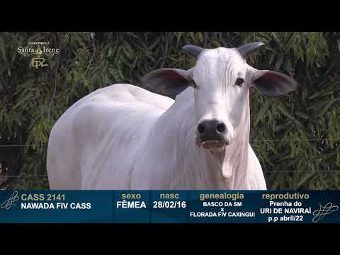 LOTE 10   CASS 2141