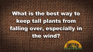 Q&A - How to keep tall plants from falling over