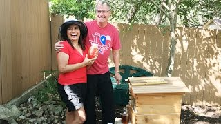 How to harvest the best honey in the world with Flow Hive (video)