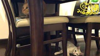 テーブルの下が騒がしくなってきたーーーー。 「ひろし」しばらく弟を眺...