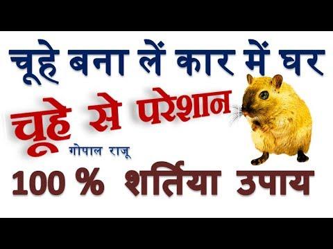 चूहे भगाने का घरेलू और सरल उपाय वो भी चूहों को मारे बिना - Get rid of Rat Without Killing