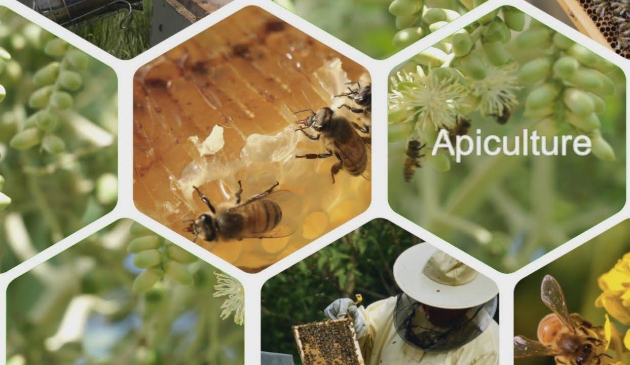 apiculteur 971