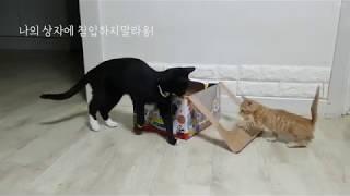 이 상자를 차지할 고양이 누구냐옹?
