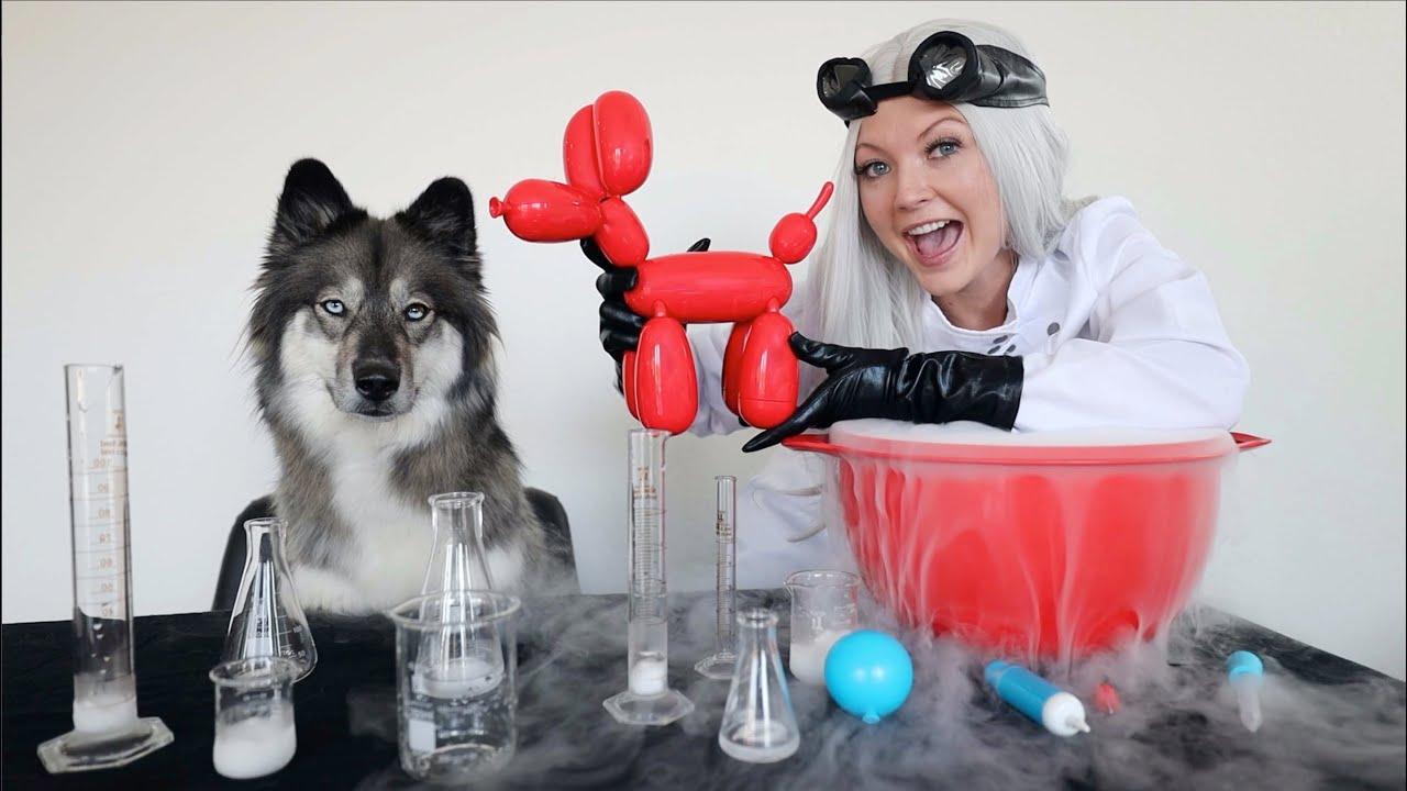 Scientist Surprises Kakoa With Squeakee the Balloon Dog!