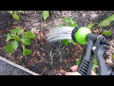 Вопрос: Для чего используют диатомит в саду?