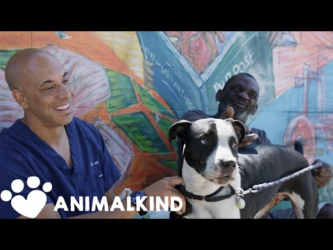 Veterinarian helps homeless pet owners for free   Animalkind