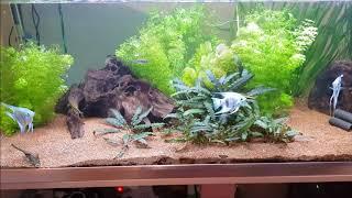 Wie viel Zeit benötigt man für ein Aquarium?