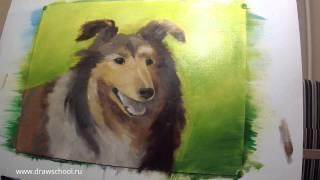 Как нарисовать собаку масляными красками (рисуем колли)(Хотите нарисовать настоящую картину красками. Тогда вам непременно понравится видео-урок , где художник..., 2016-03-09T07:19:24.000Z)