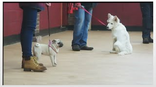 Puppy Class   Moretdm