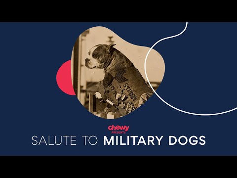 Salute to Military Dogs | Chewy