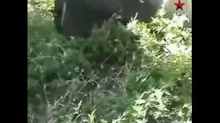 Луганск обстреляли баллистическими ракетами «Точка У»(, 2014-08-17T06:31:56.000Z)