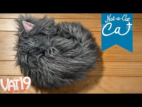 The Not-a-Cat Cat: The World's First Cat that Isn't