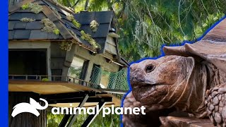 Check Out These Unbelievable Animal Cribs! | Animal Cribs