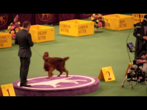 Westminster Dog Show 2012: Best in Group - Sporting and Working