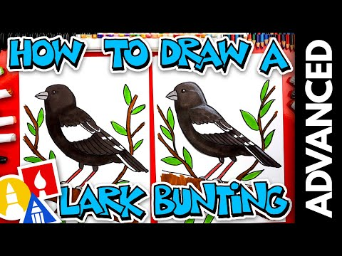 How To Draw A Lark Bunting – Advanced