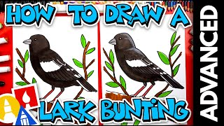 How To Draw A Lark Bunting - Advanced