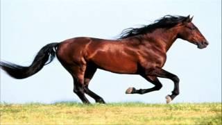 Dla twojego dziecka: Czy wiesz jakie odgłosy wydaje koń? Dźwięki konia: rżenie, parskanie, kwiczenie