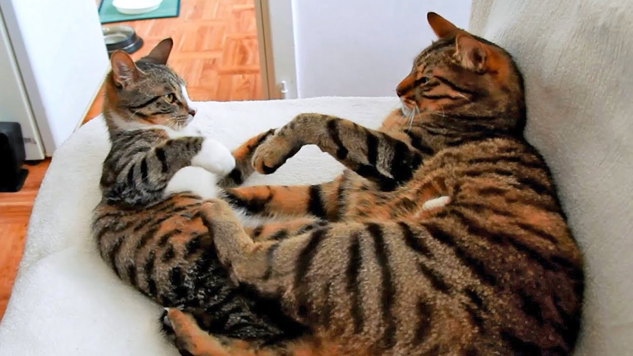 How to tell male and female cats