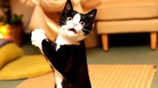 Коты Приколы с кошками!=)))Самые Смешные Кошки и Коты Прикольные!)))Хохочи до упада!))) часть 2