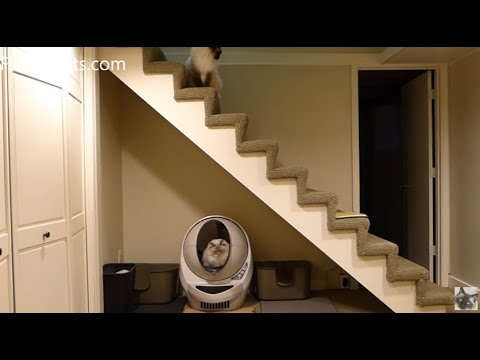 Best Automatic Litter Box - Litter Robot Open Air - Used by Ragdoll Cat Trigg - Floppycats