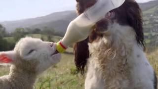 Даже животные спасают друг друга и людей   Это надо только видеть !!!