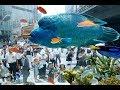 有楽町駅前に巨大水槽が出現 の動画、YouTube動画。
