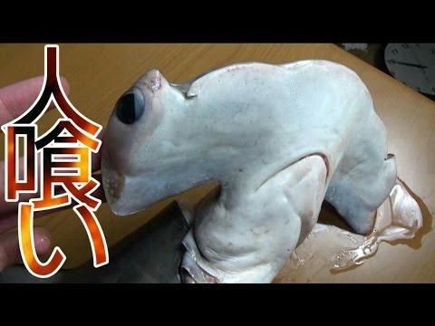 『人食いサメ』ハンマーヘッドシャークをさばいて食べてみた!