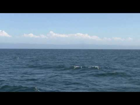 Blue Whale in the Pacific Ocean