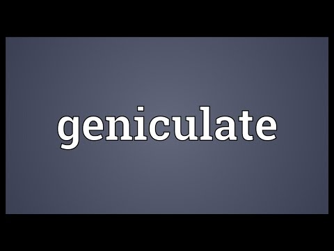 Geniculate Meaning
