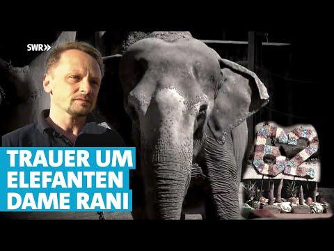 Trauer um Elefanten-Dame