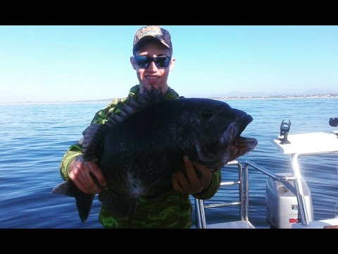 Catching BIG Fish In The Sea! Black Musselcracker, Geelbek And Shark At St Francis Bay
