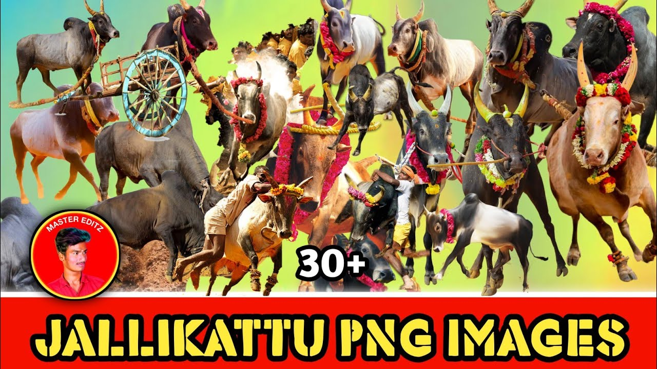 Jallikattu Kaalai Png Image Collection Jallikattu Psd And Png File Download Master Editz Youtube Choose from 10+ jallikattu graphic resources and download in the form of png, eps, ai or psd. jallikattu kaalai png image collection