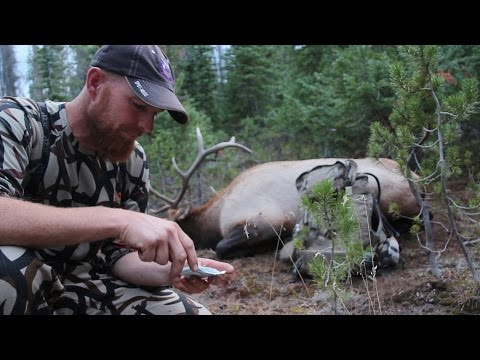 ROLLER COASTER ELK BOWHUNT IN WYOMING