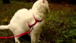 Смешные видео про кошек