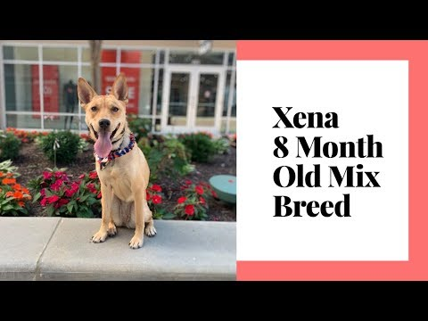 Xena | 8 Month Old Mix Breed | Confidence Building | Best Dog Training Columbus