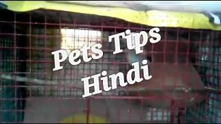 Pets Related Qus ans session....and my budgies pair cage transfer... In Hindi