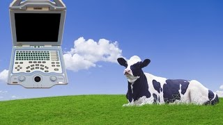 High Pregnancy In Cow Of 67 Days, See How Veterinarian Diagnosed Using A Vet Ultrasound KX5000V