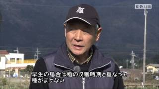 2017年2月放送 「花菜 小山さん(長岡京市)」 古くから伏見桃山あたりで...