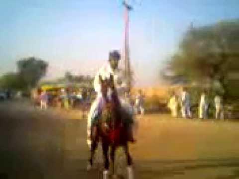 Sindhi horse of muhammad khan junejo